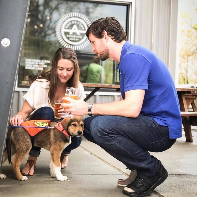 adoption dog archetype