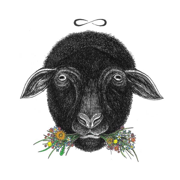 Image or graphic for Black Sheep
