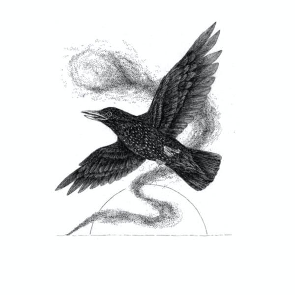 Starling-art