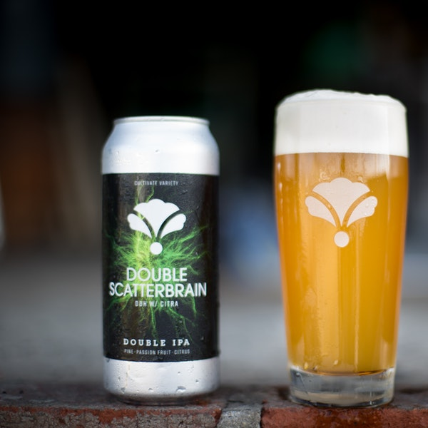 DOUBLE SCATTERBRAIN DDH-CITRA