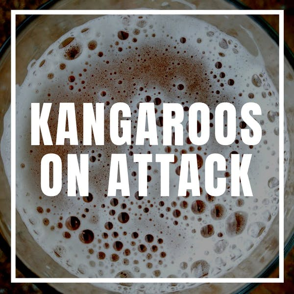 Kangaroos on Attack