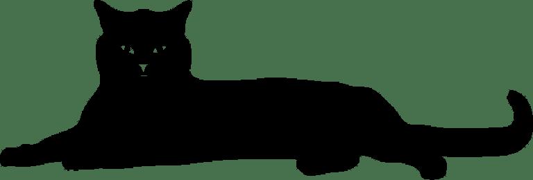 black-cat-laying-2x