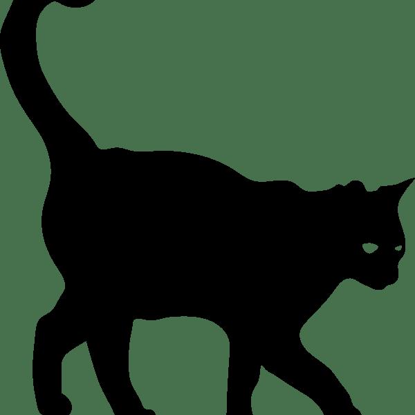 cat-around-corner