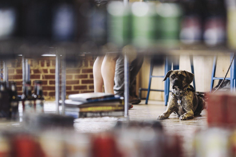 Dog in the bottle shop