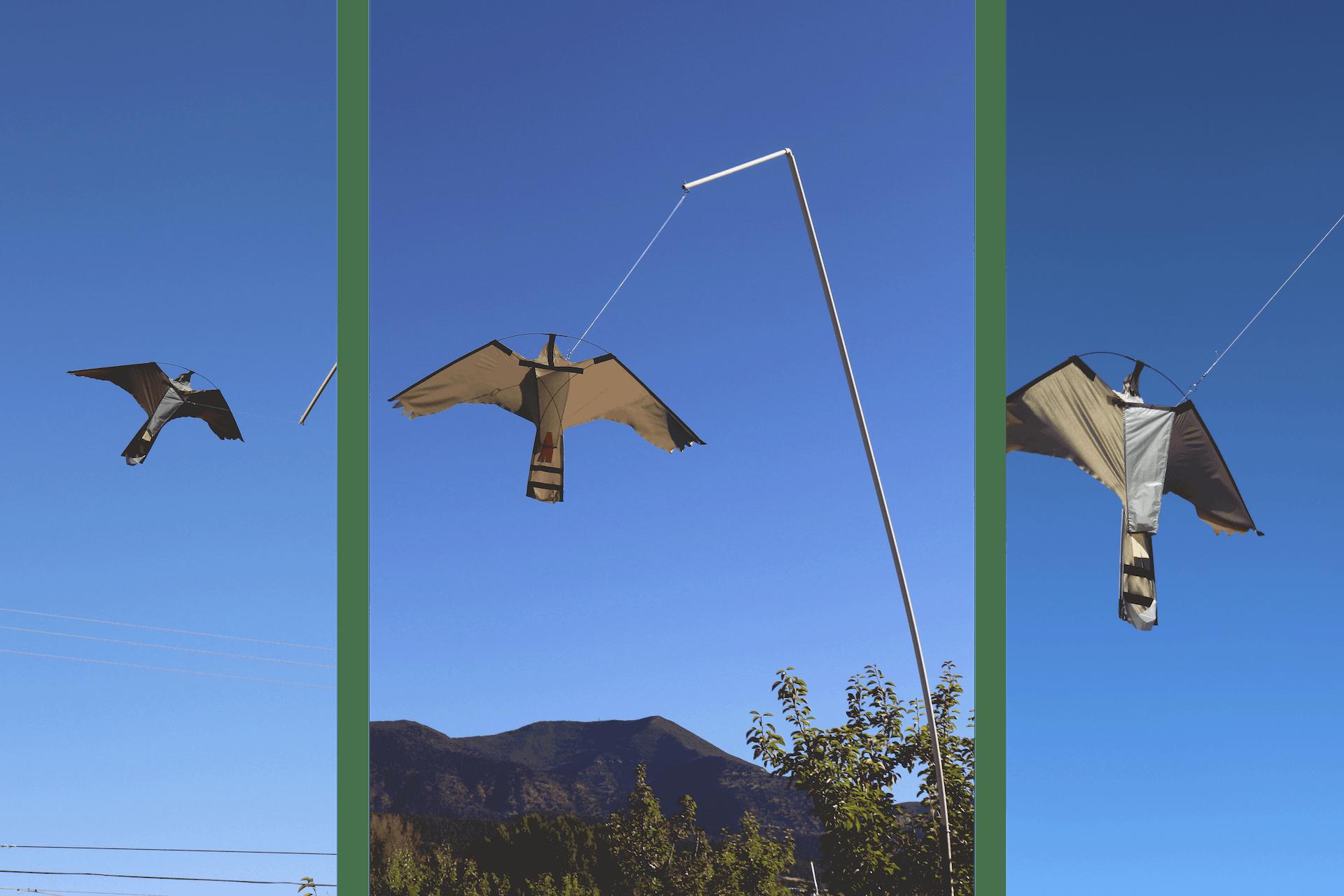 Bird Kite
