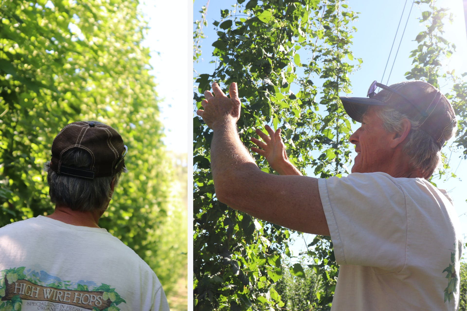 High Wire Hops_David