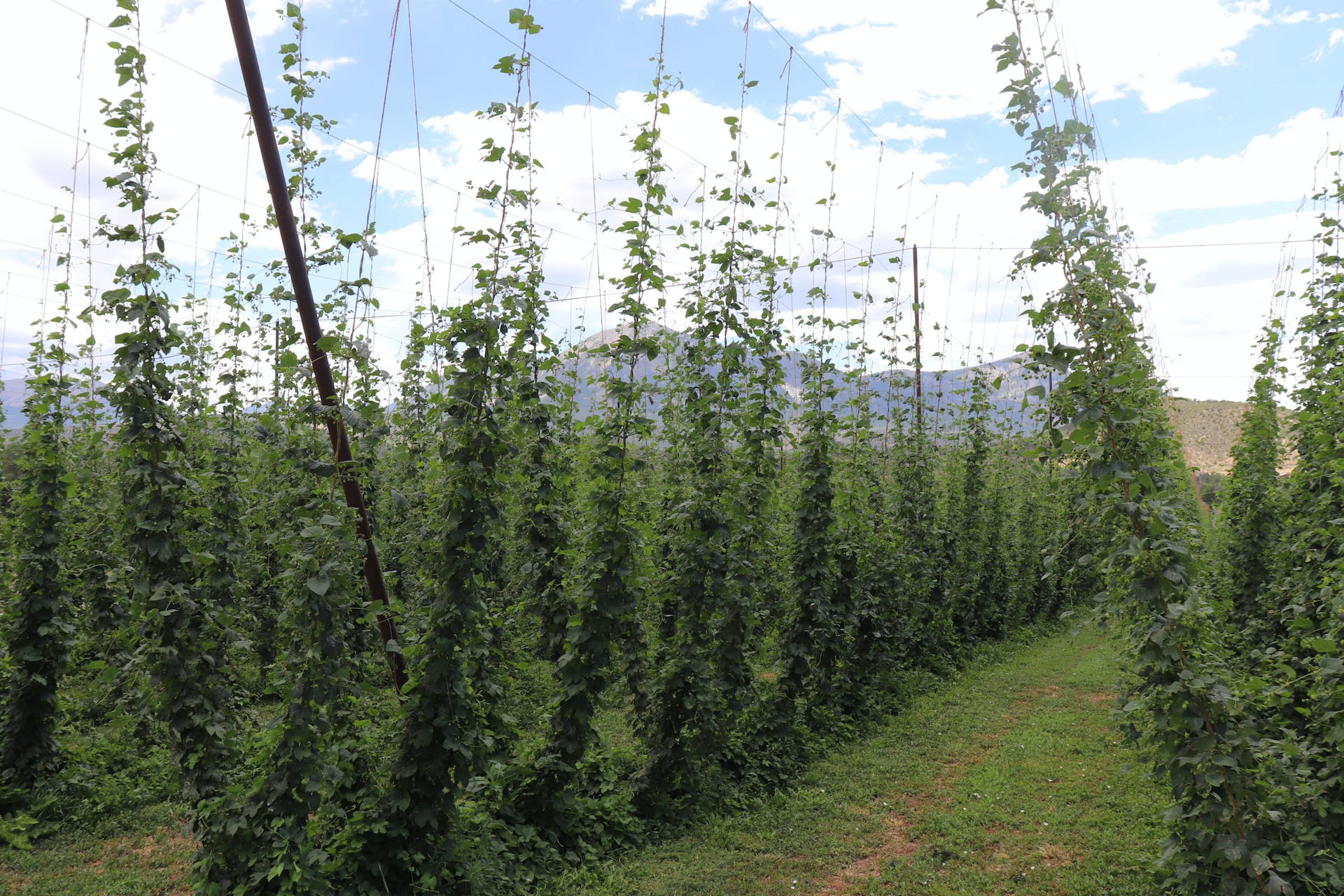 High Wire Hops Farm