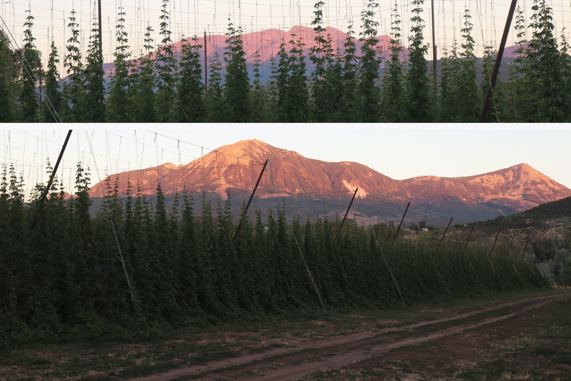 High Wire Hops_Sunset