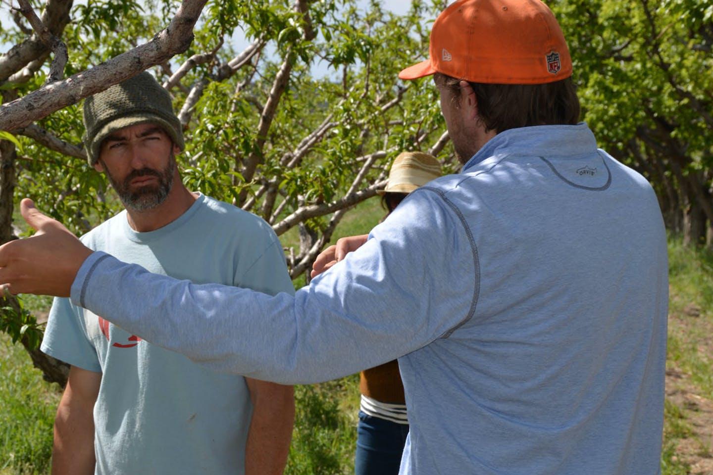Nectarine Orchard 2 Cropped