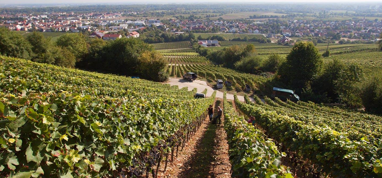 Groehl vineyards