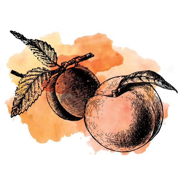 Graphic for Sour Apricot Peach
