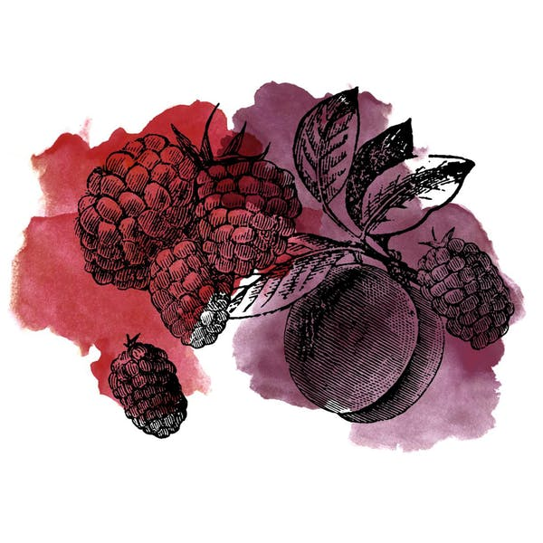 Graphic for Sour Boysenberry Plum
