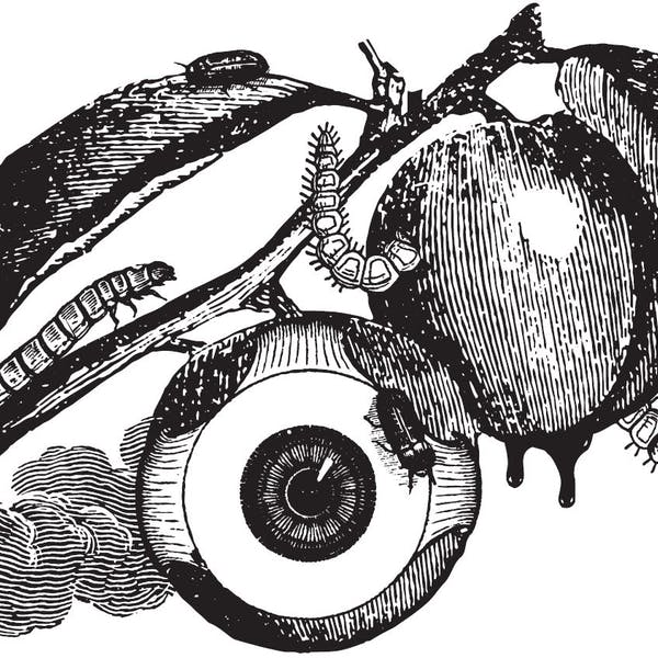 Image or graphic for The Ripening