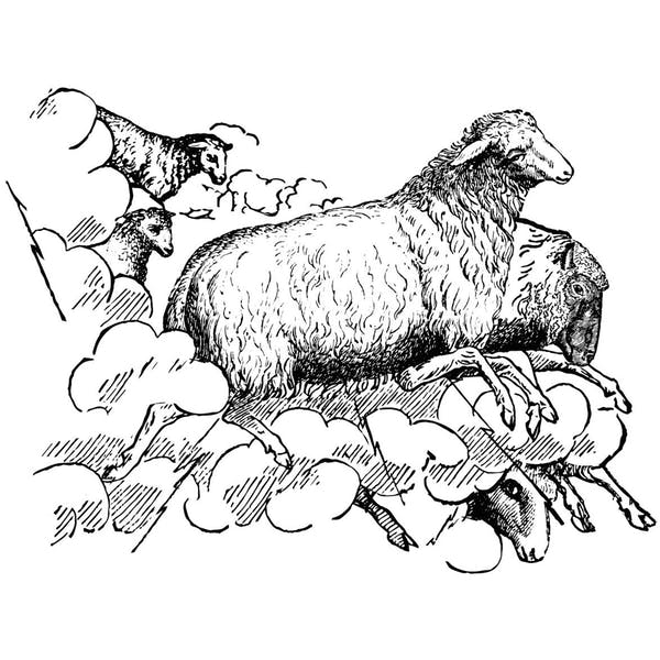 Graphic for Thunder Sheep