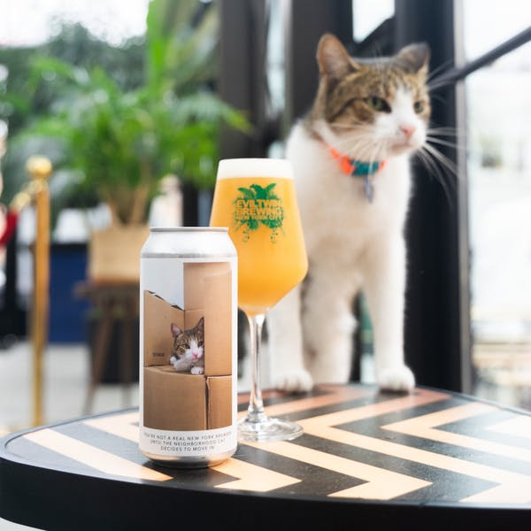 Image or graphic for YOU'RE NOT A REAL NEW YORK BREWERY UNTIL THE NEIGHBORHOOD CAT DECIDES TO MOVE IN