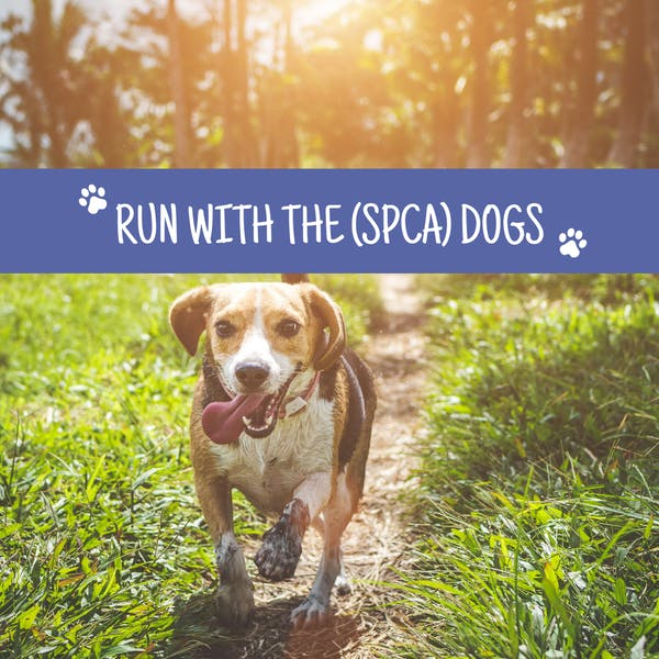 Run With the (SPCA) Dogs
