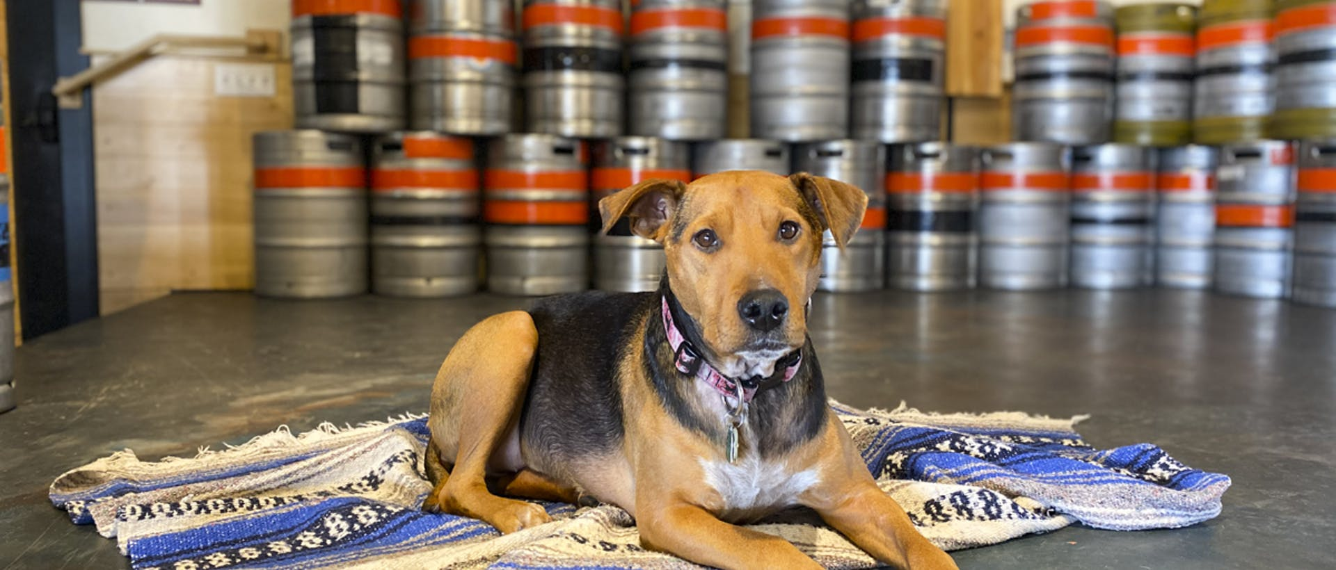 Dog in the taproom