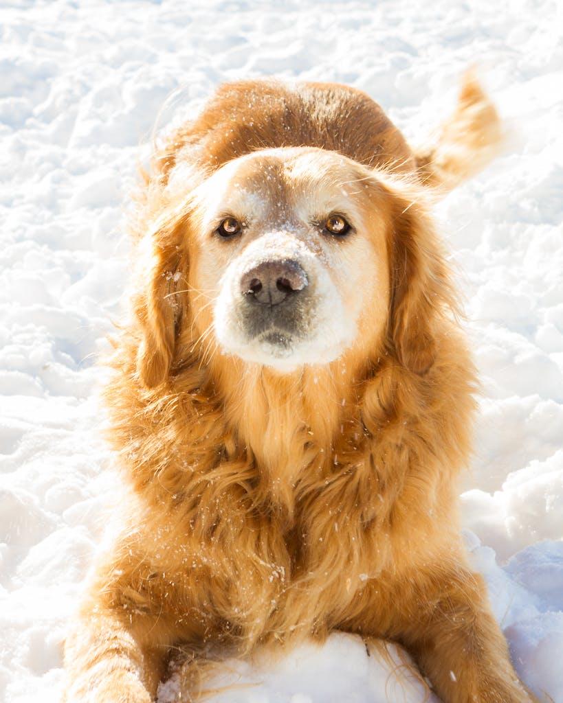 Charlie Dog 20150312 004