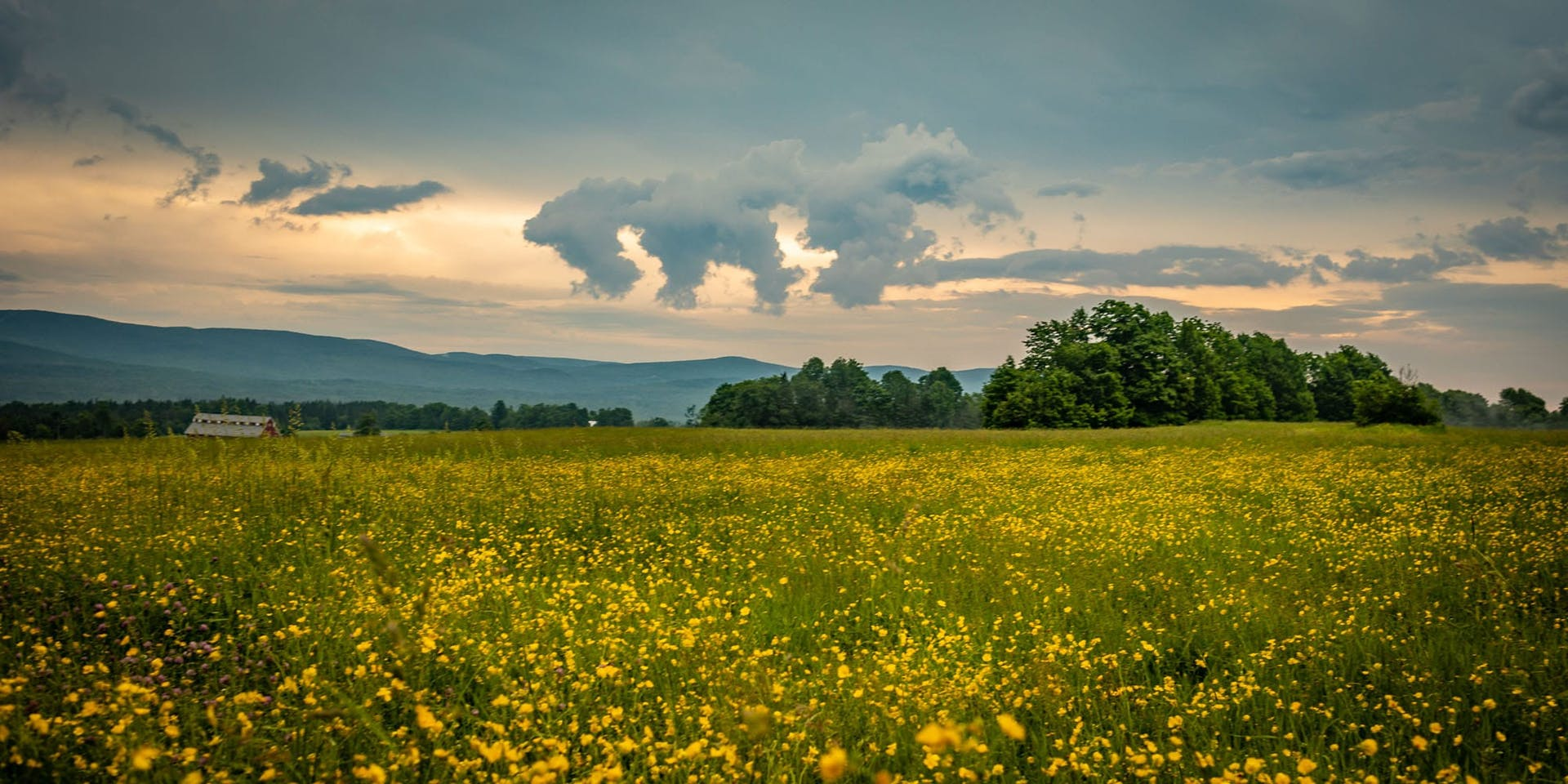 Visit - Flowers Field