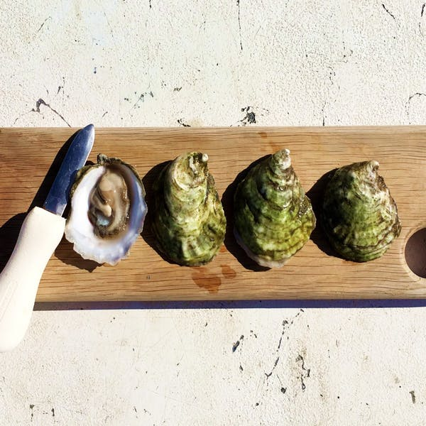 Oxbow Oyster Sundays