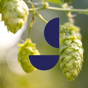 Protagonist Beer - hops glitch letter